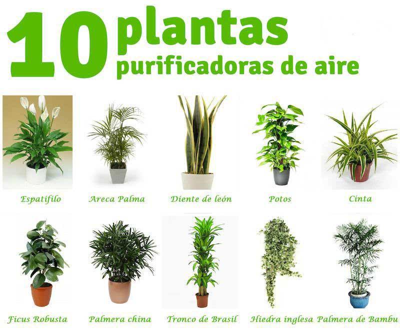 Ecolog a 10 plantas que purifican el aire de tu casa for Plantas ornamentales y medicinales